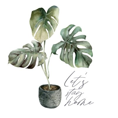 Image Watercolor Lets stay home card with monstera. Isolation during an epidemic. Hand painted exotic plant with pot isolated on white background. Floral illustration for design, print or background.