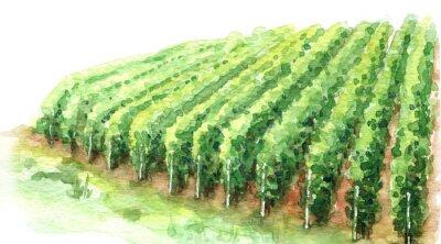 Image Watercolor Sketch Rural Scene Fragment of Vineyard