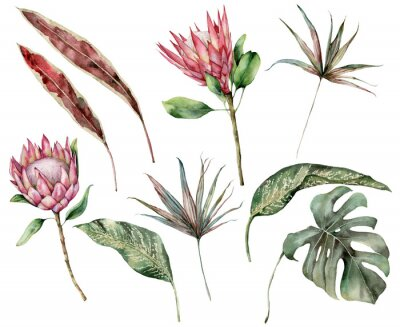 Image Watercolor tropical set with protea and palm leaves. Hand painted exotic flower, palm and monstera leaves isolated on white background. Floral illustration for design, print, fabric or background.