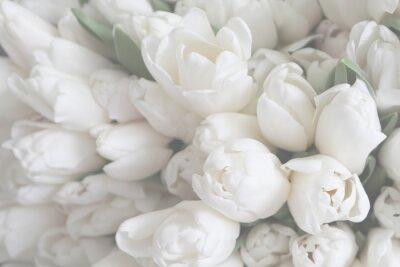 Image White tulips on the grey background, close-up.