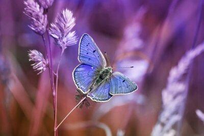 Image Маленькая бабочка среди травы в сиреневых тонах