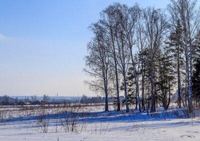 Image Большие березы отбрасывают тень на заснеженное поле