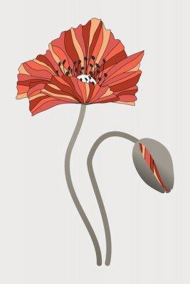 Image бутон  и цветок мака с необычными лепестками