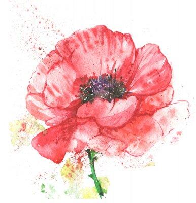 Image Красный цветок, мак, иллюстрация акварелью