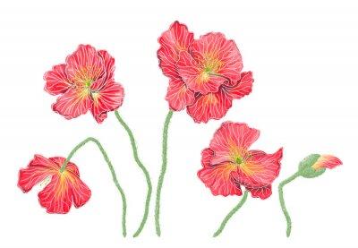 Image Пять красных маков, имитация акварели