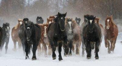 Image 雪原 を 走 る 馬