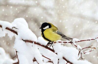 Image Зимой Синица.