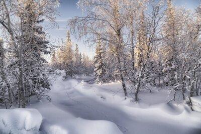 Image Зимняя лесотундра