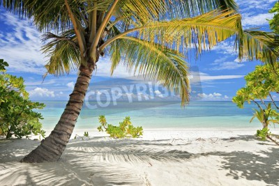 Papiers peints A scene of palm trees and sandy beach in Maldives island