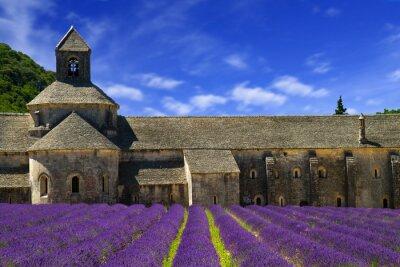 Papiers peints Abbaye de Sénanque et des rangées de floraison des fleurs de lavande. Gordes, Lu
