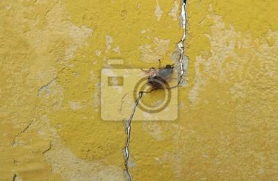 Abeille, vieux, jaune, mur