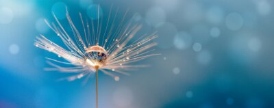 Papiers peints Abstract blurred nature background dandelion seeds parachute. Abstract nature bokeh pattern