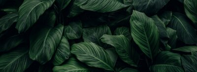 Papiers peints abstract green leaf texture, nature background, tropical leaf