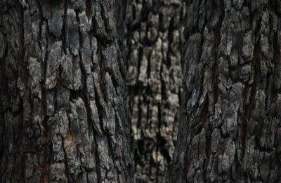 ABSTRACT TREE BARK