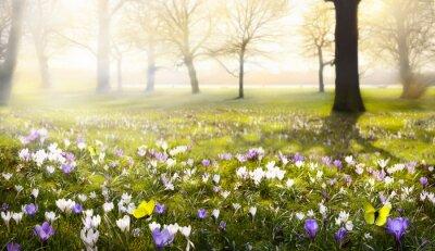 Papiers peints abstraite ensoleillée belle Spring background