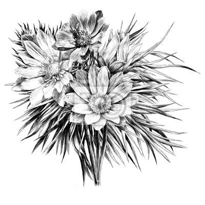 Papiers Peints Adonis Fleur Branche Sprout Pétales Un Bouquet Ensoleillé Lumineux