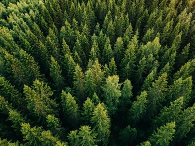 Papiers peints Aerial top view of summer green trees in forest in rural Finland.