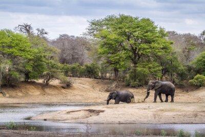 Papiers peints Africaine, buisson, éléphant, Kruger, national, Parc