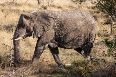 Papiers peints Africaine, éléphant, marche, par, Etosha, national, Parc, Namibie