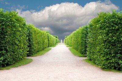 Papiers peints allée dans le parc avec des arbres exactement topiaires