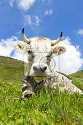 Allongé vache sur le pâturage
