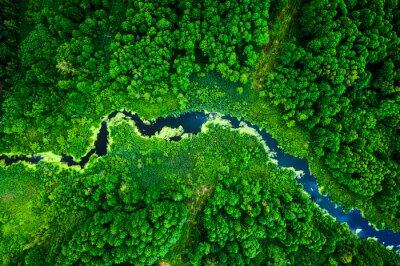 Papiers peints Amazing blooming algae on green river, aerial view