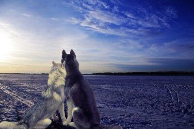 Papiers peints Amoureux - deux chiens rencontrer le coucher du soleil