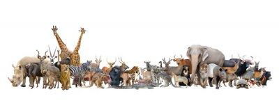 Papiers peints animaux du monde