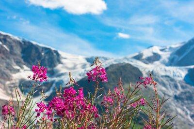 Papiers peints Apls suisses avec des fleurs sauvages roses