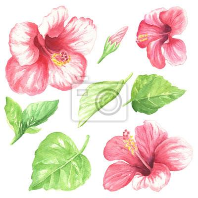 Papiers Peints Aquarelle Fleurs Feuilles Dessin Coloré Coloré Hibiscus