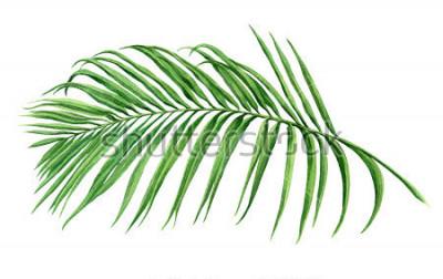 Papiers peints Aquarelle, noix de coco, feuille de palmier, feuilles vertes isolées sur fond blanc. Aquarelle peinte à la principale illustration exotique feuille exotique modèle de style vintage en papier peint Haw