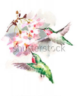Papiers peints Aquarelle oiseaux Colibris voler autour des fleurs de cerisier fleurs dessinées sur le jardin principal illustration isolé sur fond blanc