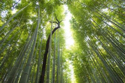Papiers peints Arashiyama, bambou, forêt, kyoto, japon