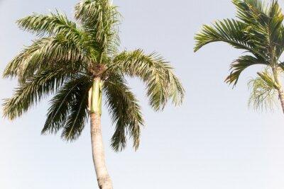 Papiers peints Arbre à noix de coco et ciel bleu en plage d'été