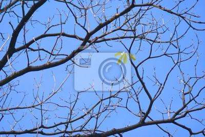 Arbre Ciel Branche Nature Bleu Branches Hiver Foret Arbres