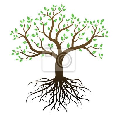 Arbre Avec Racine arbre de couleur avec des racines et des feuilles vertes - vecteur