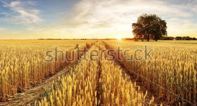 Papiers peints Arbre et champ de blé