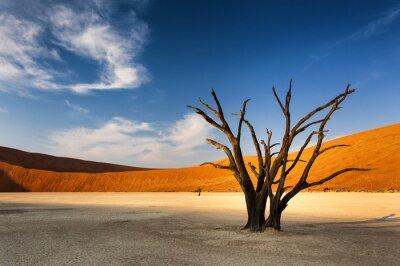 Papiers peints Arbre mort à Sossusvlei, dans le désert du Namib, Namibie