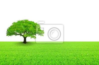 Papiers peints arbre sur prairie et blanc aime