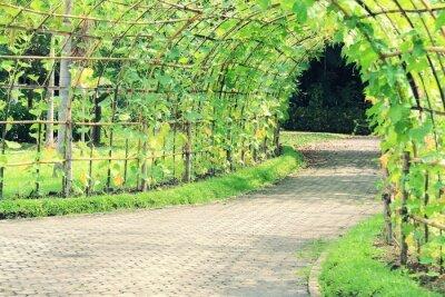 Papiers peints Arbre, tunnel, angulé, Luffa, plante