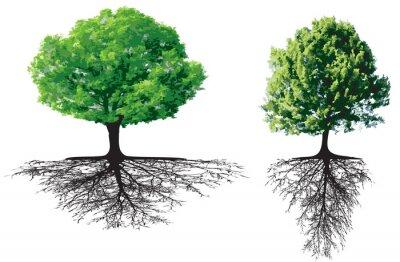 Arbre Avec Racine arbres avec des racines papier peint • papiers peints plats, racines
