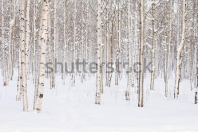 Papiers peints Arbres dans le parc ou les bois dans la neige d'hiver