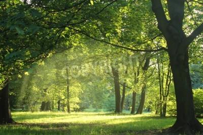 Papiers peints arbres dans une forêt de l'été