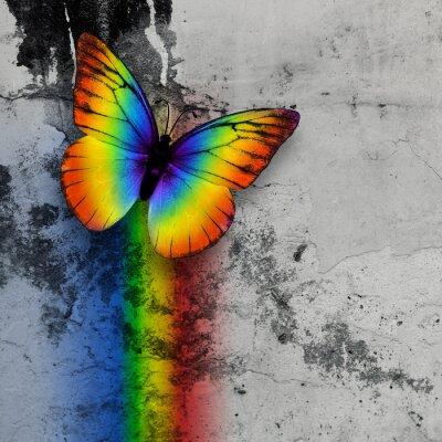 Papiers peints arc-en-papillon