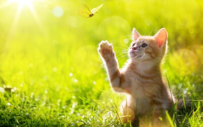 Papiers peints art Jeune chat / chaton chasse un papillon avec Contre-jour