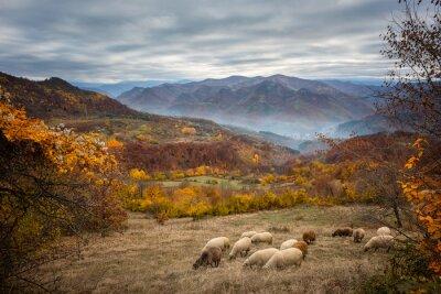 Papiers peints Automne d'or / vue d'automne étonnante d'une prairie de montagne dans les montagnes centrales des Balkans, en Bulgarie