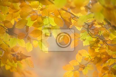 Automne feuilles de la forêt et de couleurs pour un fond
