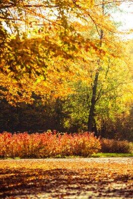 Papiers peints Automne, paysage, Parc