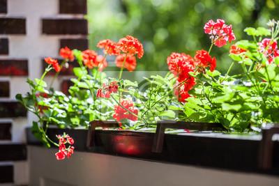 Balcon Fleurs Jardin A La Maison Avec Fleur De Geranium Papier