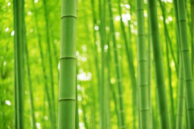 Papiers peints Bamboo Forest